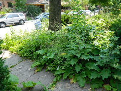 Front garden cleanup Leslieville before Paul Jung Gardening Services