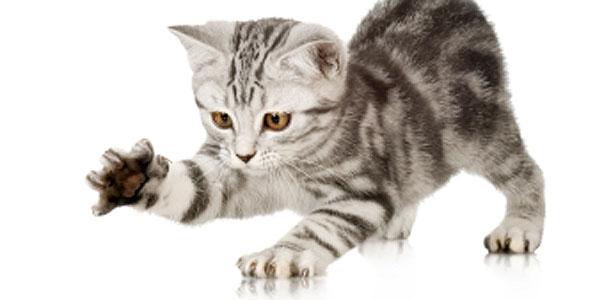 cat for mayor