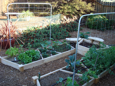 Square-foot raised garden