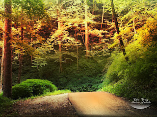 Beautiful Light in the Jungle