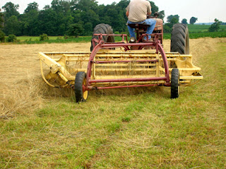 raking hayfield 7