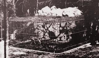 La gabbia della lupa