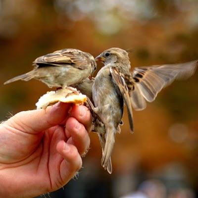 Les oiseaux dans mon jardin d 39 hiver la po sie de timilo for Jardin 4 moineaux