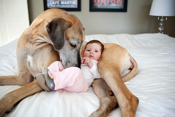 22 Little Kids And Their Big Dogs