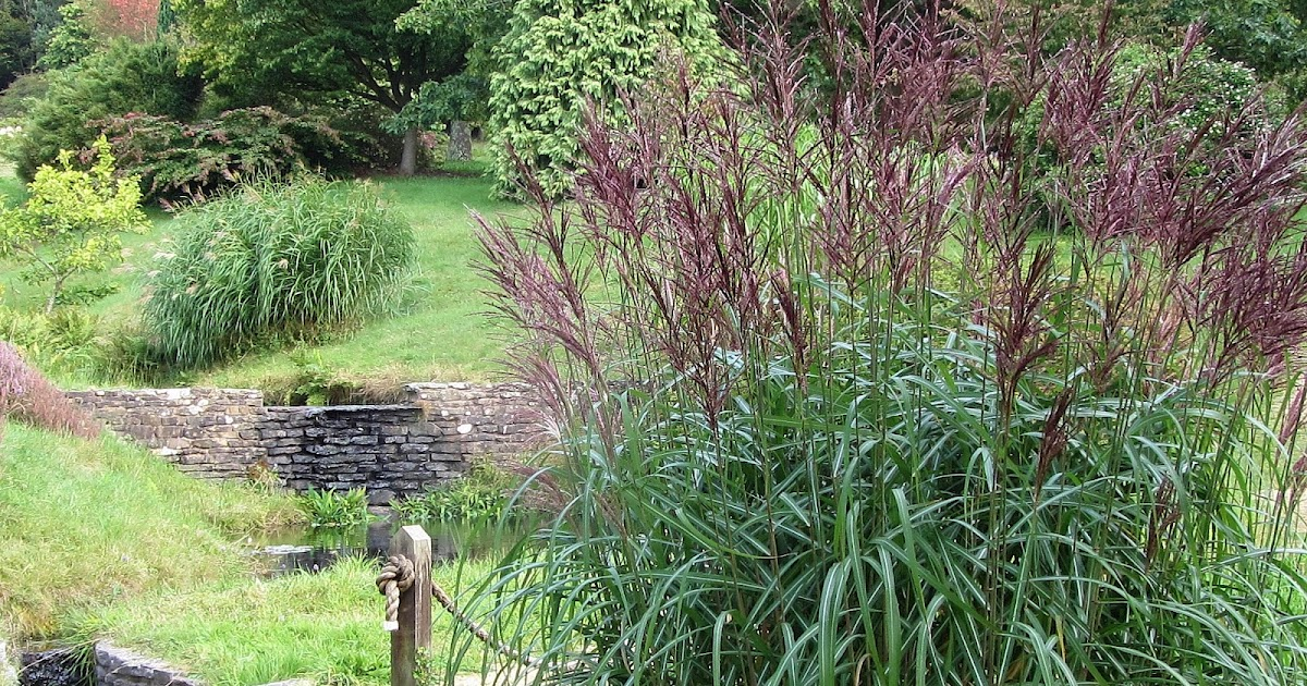 high beeches gardens grasses at high beeches. Black Bedroom Furniture Sets. Home Design Ideas