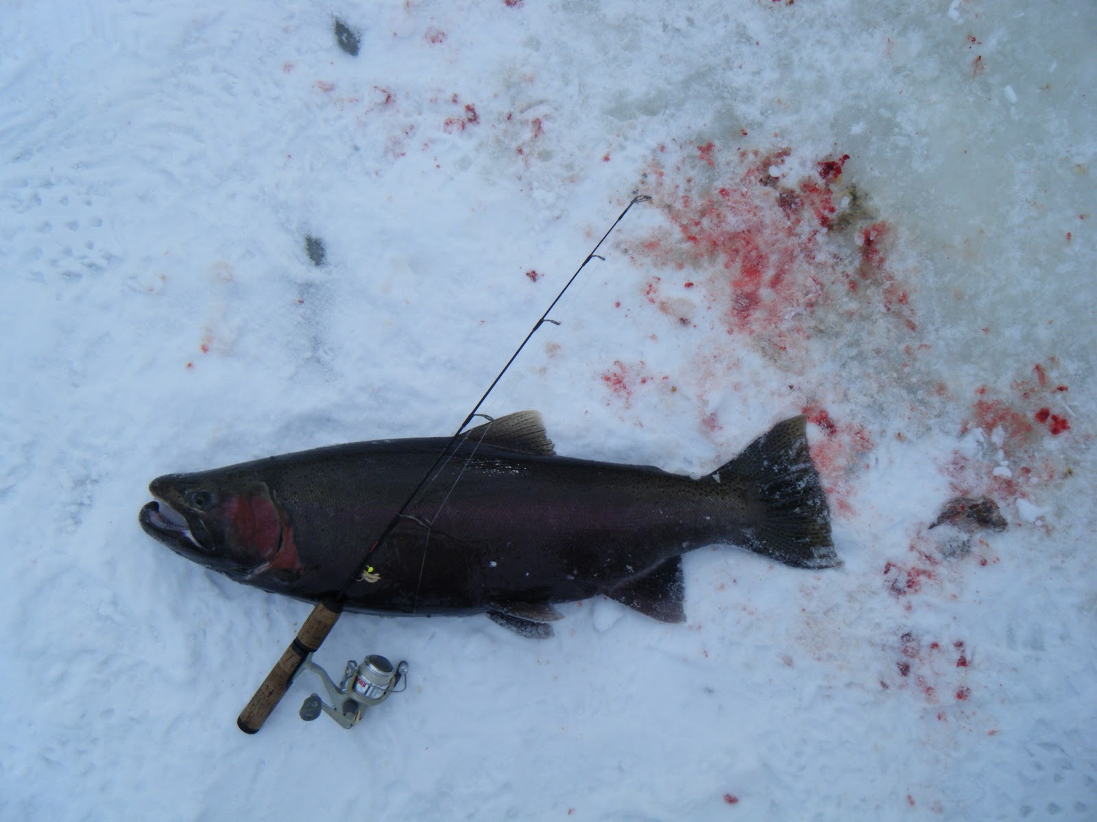 Wisconsin fishing reports ice fishing for great lakes trout for Jig fishing for trout
