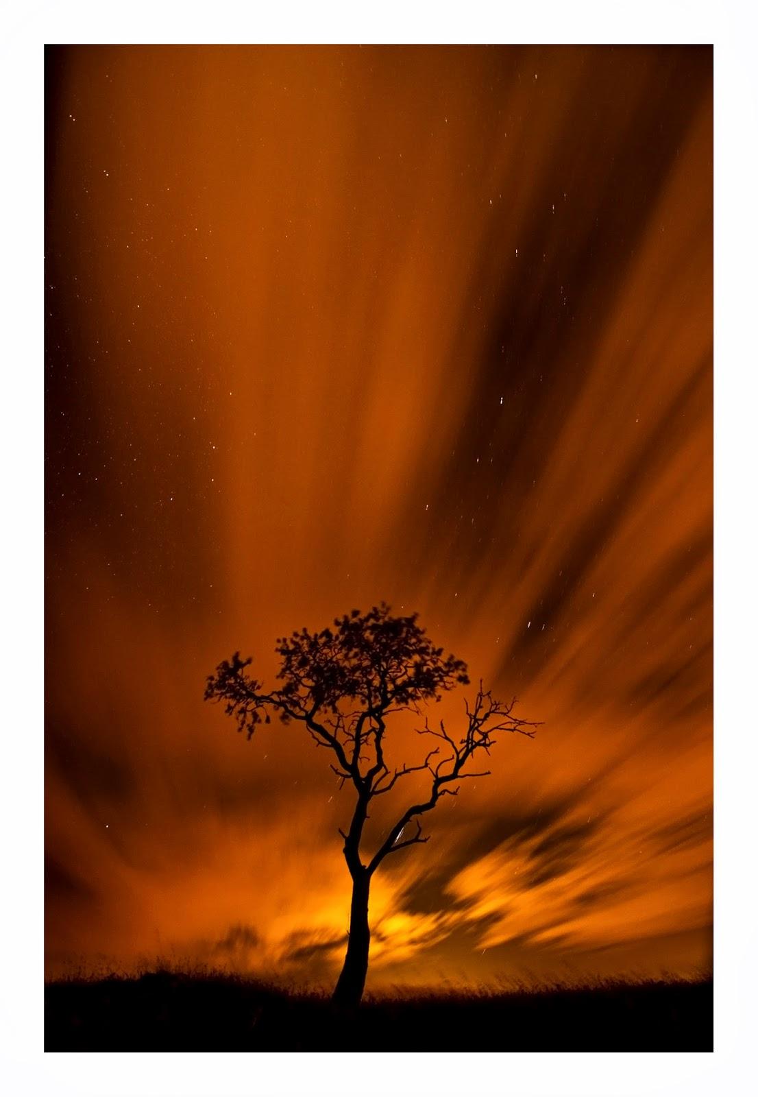 Rbol de fuego alfredo espino for Arbol de fuego jardin
