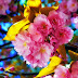 Colorful Flowers images pics gallery