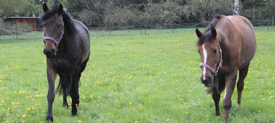 Pampered Ponies - Living the Luxurious Life in Luxembourg