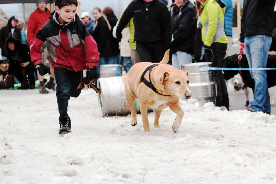 k9 keg pull sandpoint idaho winter carnival || chestnut mocha blog