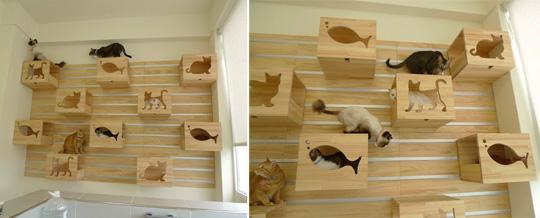 Ze Amazing Cat Litter
