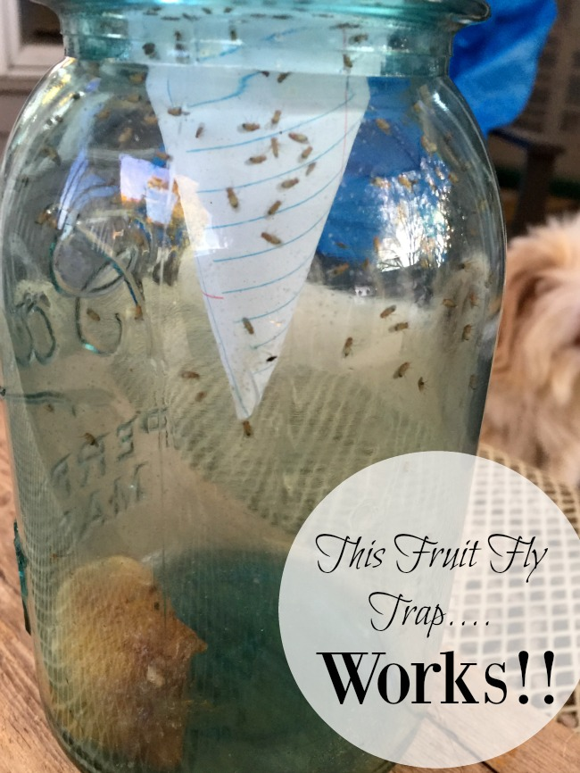 A Fruit Fly Trap that Works! www.homeroad.net