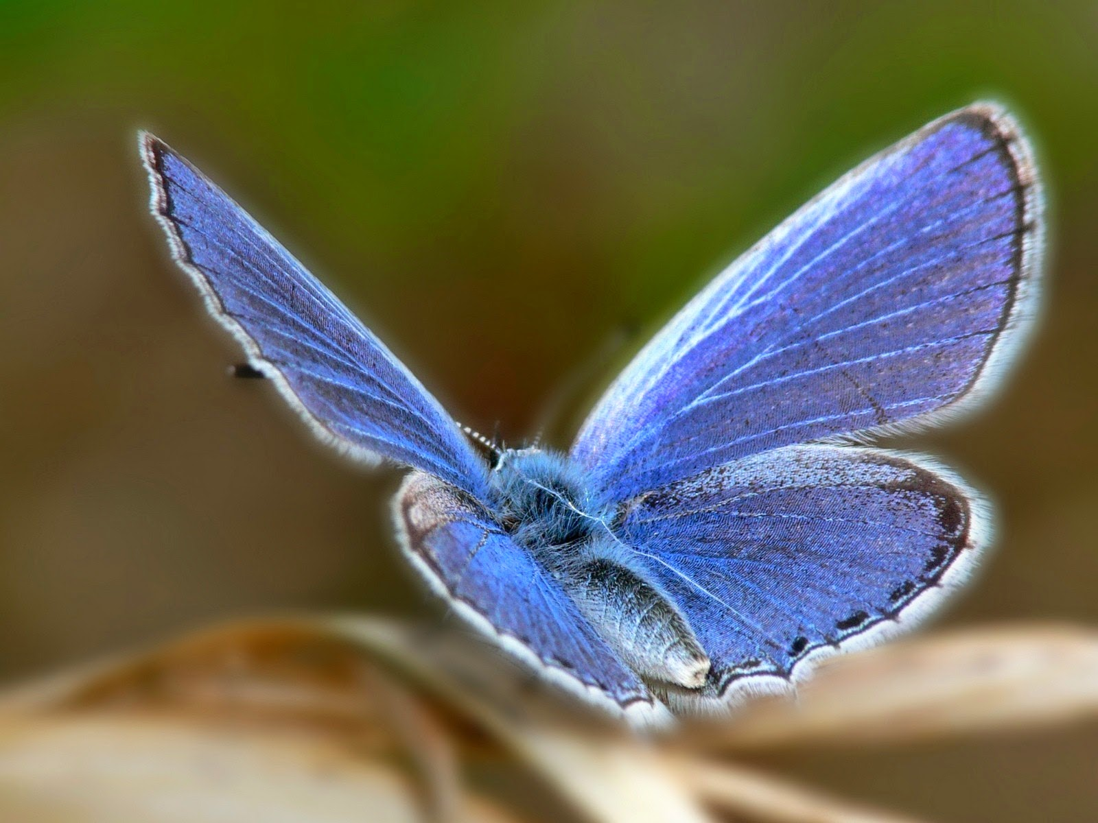latest wallpapers of butterflies - photo #29