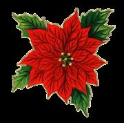 Etiquetas: IMÁGENES DE FLORES Y PLANTAS flores