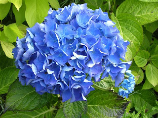 blueflowers1+%2528Small%2529
