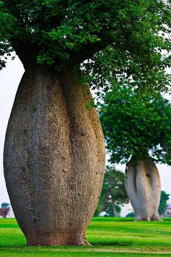 Funny Tree,Toborochi Tree
