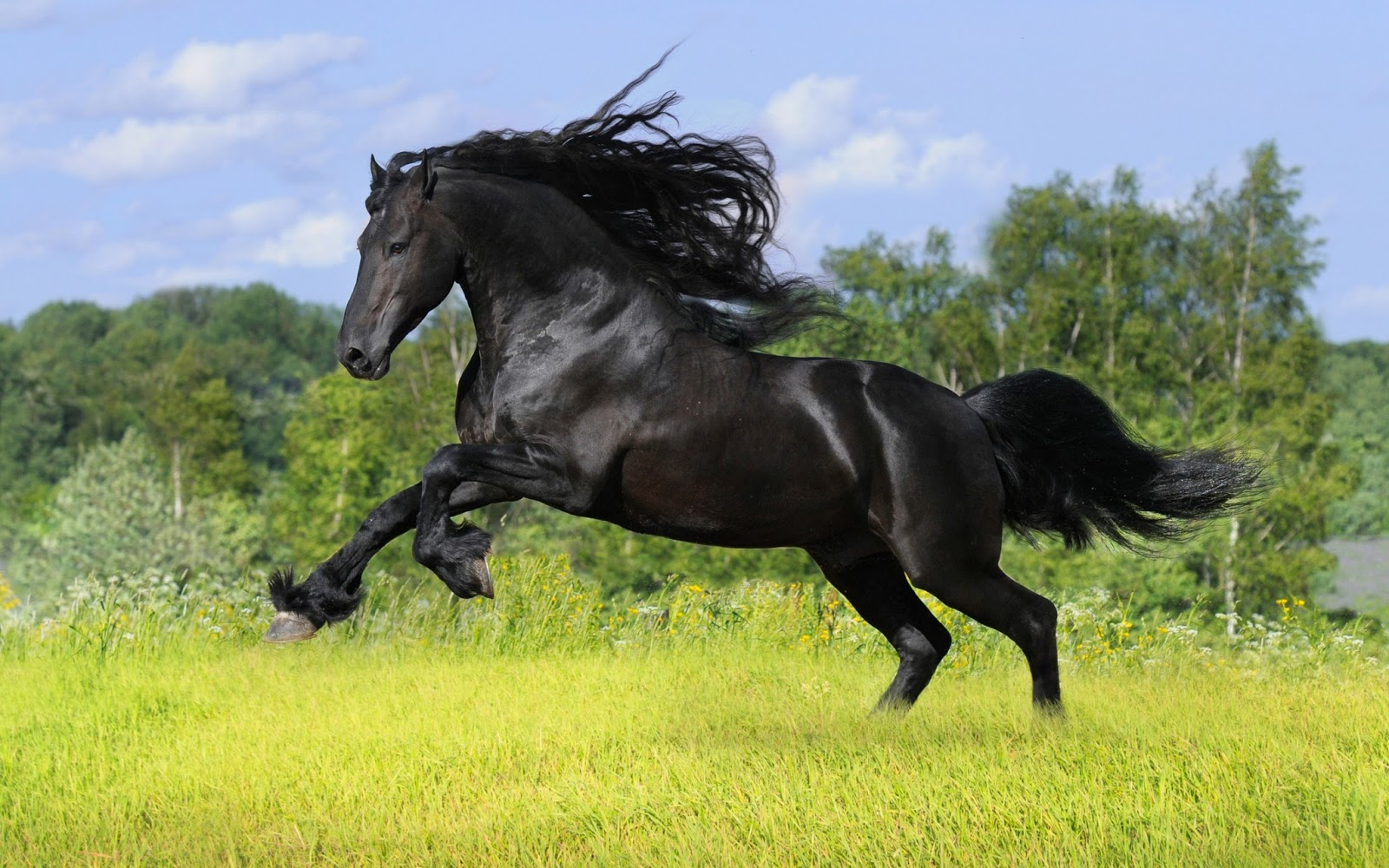 Wild horses hd wallpapers check out the cool latest wild horses images