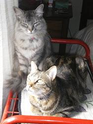 Meus filhos felinos!