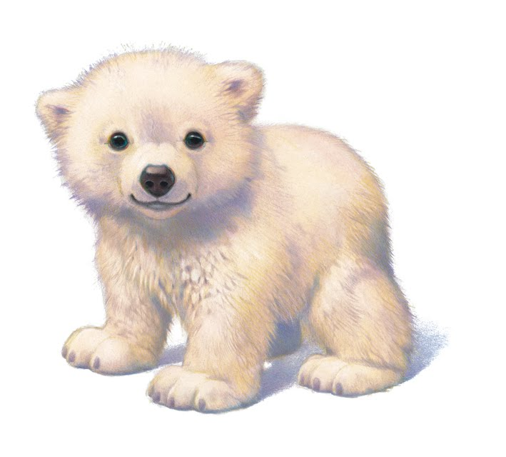 Hairless Polar Bear Polar bears aren't white?