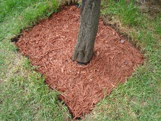 Venta de troncos de pino