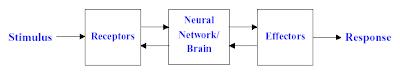 Mekanisme 3 tahap otak