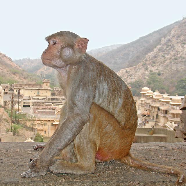 Un des nombreux singes habitant la vallée des singes