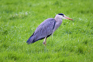 le site de l'association Nature'L de préservation de la faune et de la flore Nature'L à Luisant