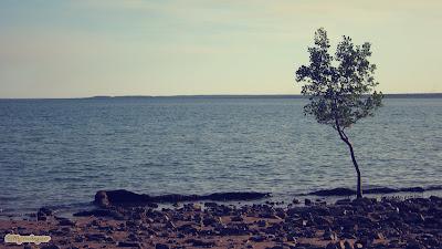 playa-árbol