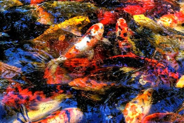 Dekorasi Lampu pada Kolam Ikan