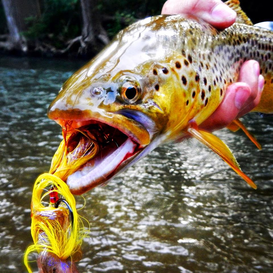 D h mad river fishing report 8 24 14 for Mad river fishing