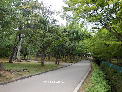 The Nara Park walkway