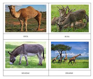 28+ Hewan herbivora adalah hewan pemakan terupdate