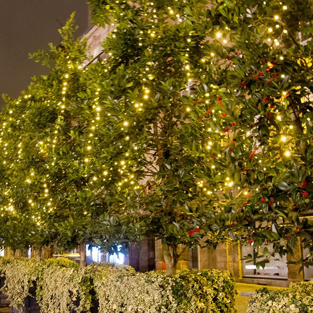 blog Rennes la paillette décorations Noel guirlandes lumineuses sapins arbres