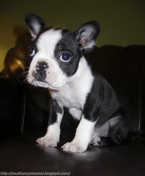 Very nice puppy.