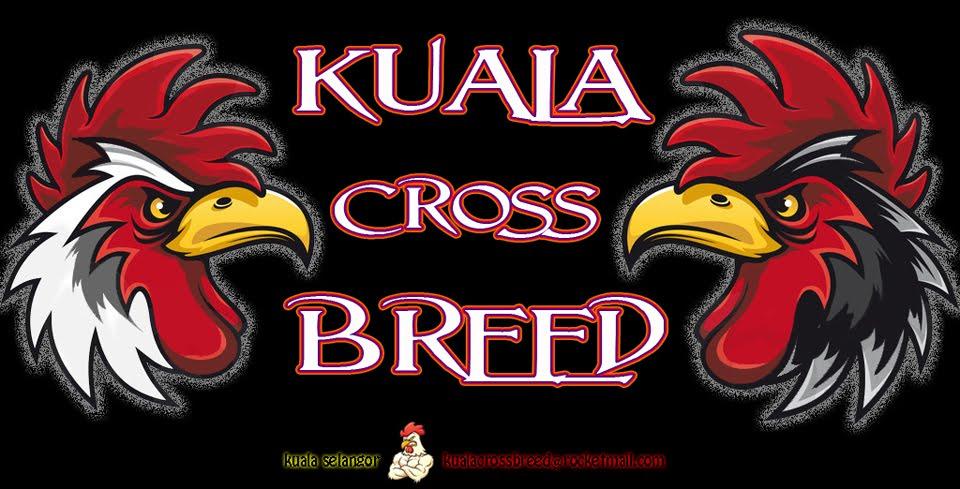 Kuala Cross Breed