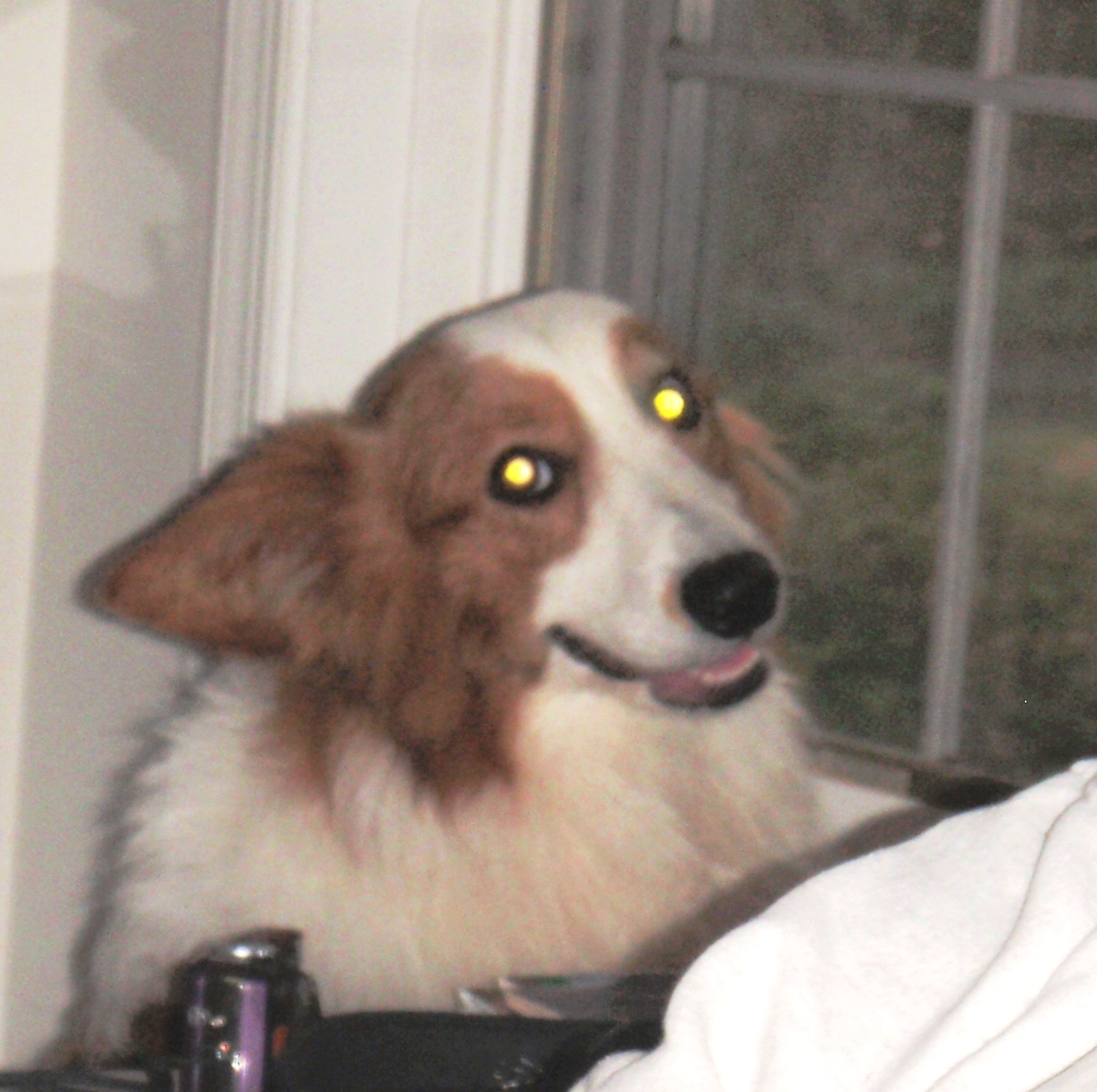 Image Result For Can Dog