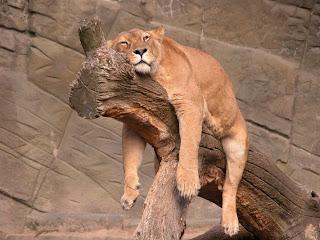 Funny Lazy Loine