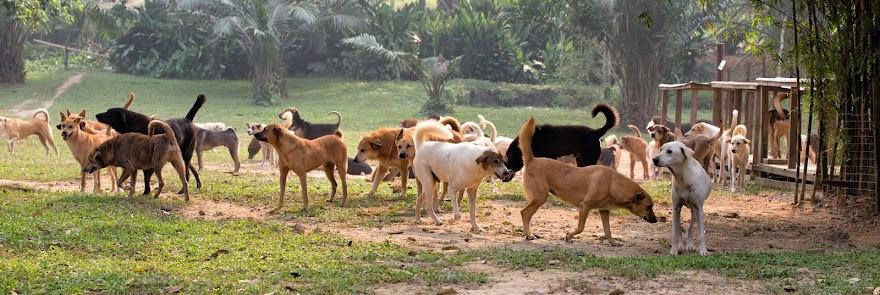 Noah's Residents