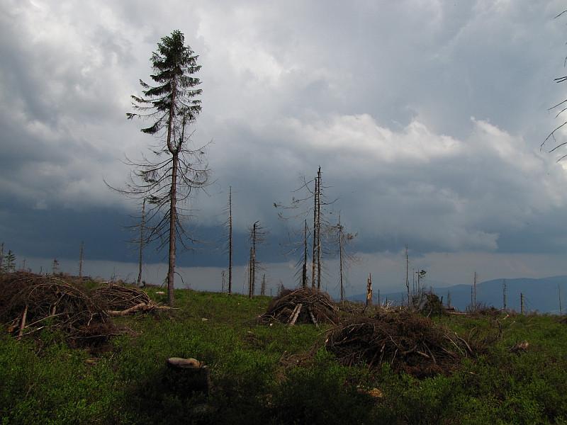 Wyrch Wisełka (1190 m n.p.m.) - stąd jeszcze tylko 10 minut do wierzchołka Baraniej Góry.