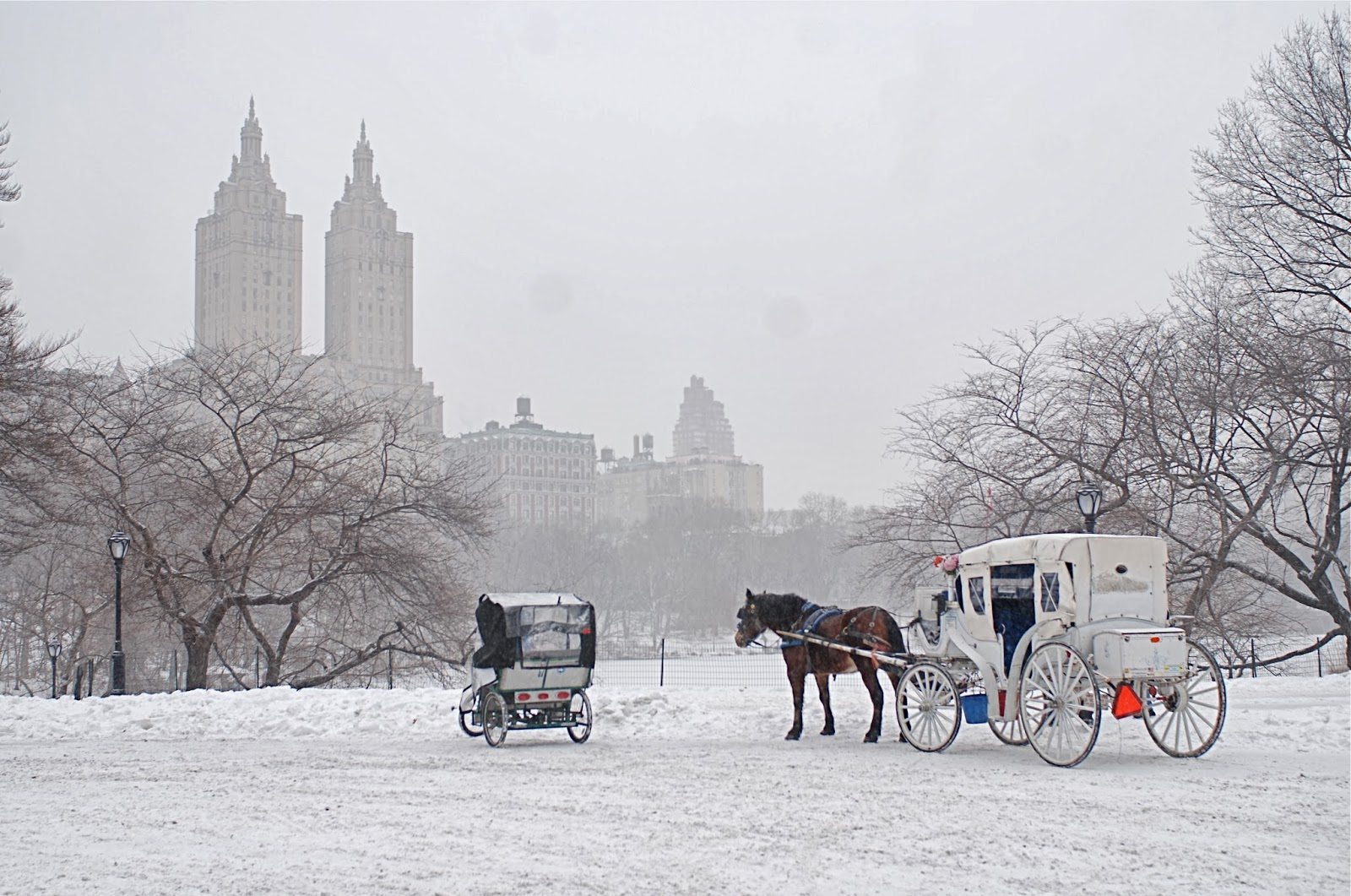 nyc nyc iconic horse drawn carriage rides in central park