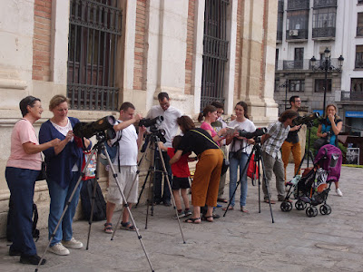 CERNÍCALOS PRIMILLA EN LA CATEDRAL DE SEVILLA. Observación de aves en directo. Organiza el Grupo Local SEO-Sevilla de SEO/BirdLife.