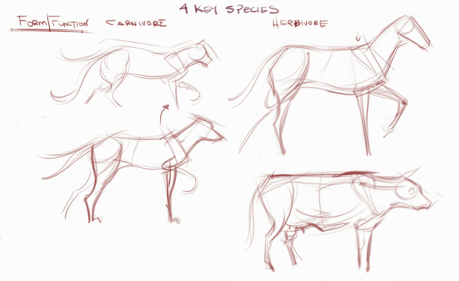 figuredrawing.info news: Comparative Anatomy - Thoughts on Analyzing ...
