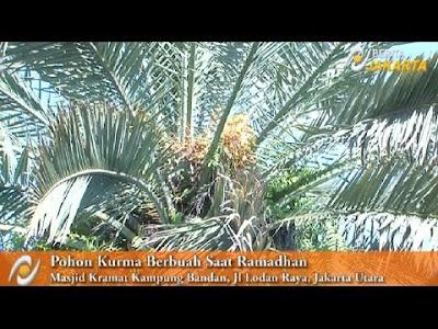 Misteri Pohon Kurma di Masjid Kramat jakarta