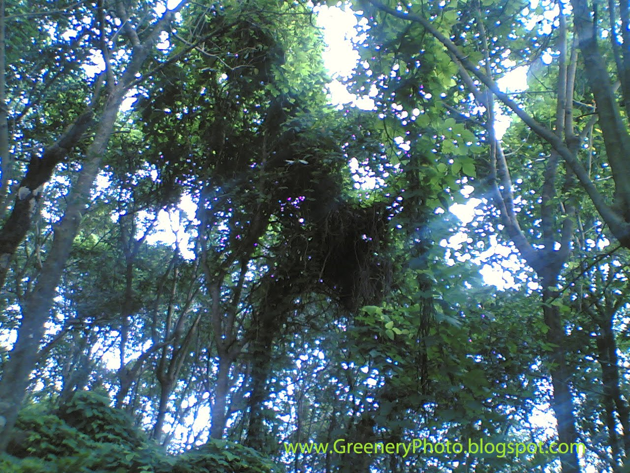 Kerala endangered species endangered species of plants rare plants