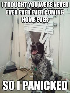 hund bekommt panik weil herrchen nicht mehr nach haus e kommt und zerstört eine tür.