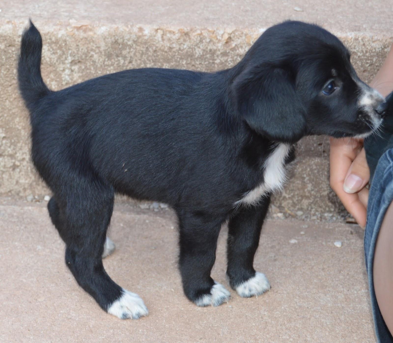 Hunde Aus Zentral Portugal : hunde aus zentral portugal adoptieren elfi ~ Lizthompson.info Haus und Dekorationen