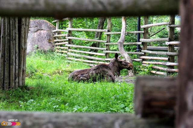 Zoo de Skansen (Stockholm)