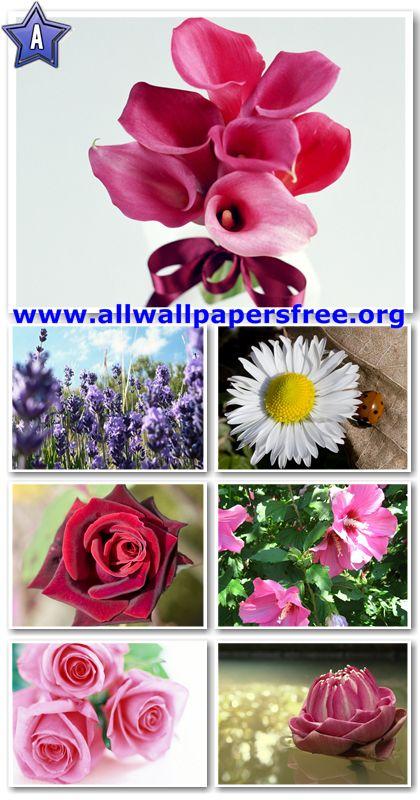100 Beautiful Flowers Wallpapers 1280 X 1024 [Set 8]