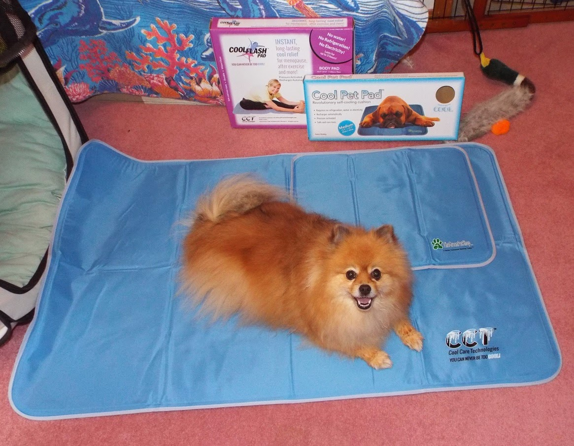 pepper 39 s paws the green pet shop cool pet pad product. Black Bedroom Furniture Sets. Home Design Ideas