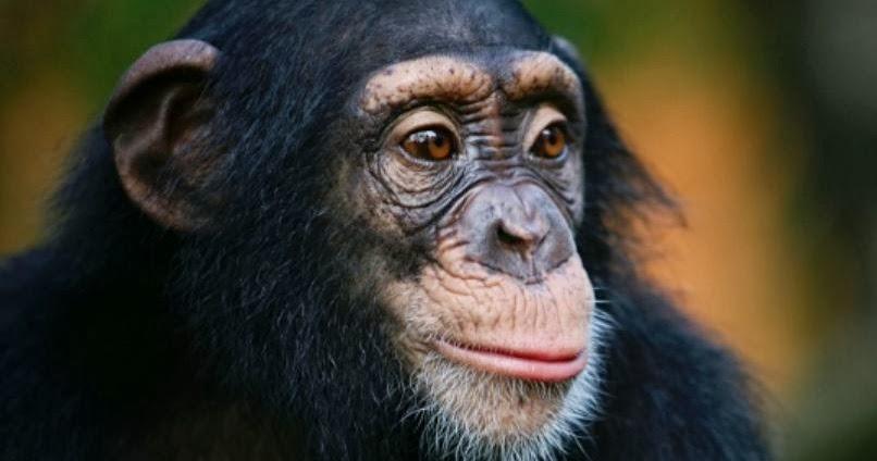 Nonhuman Primate S Natural Setting